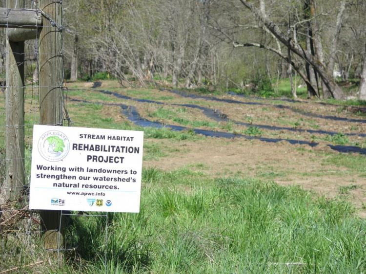 Applegate Partnership project on Thompson Creek showing plantings