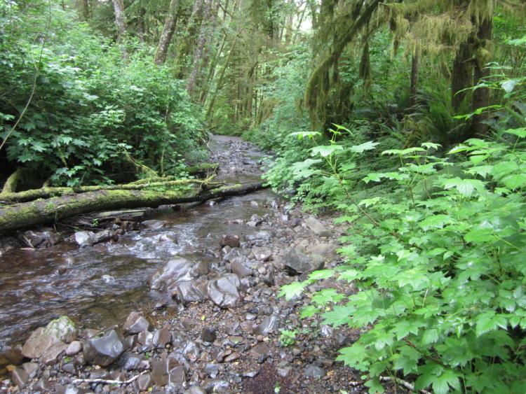 The Necanicum River in Oregon's Coast Range.