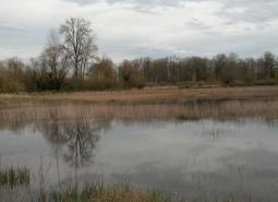 Upper Willamette River Floodplain