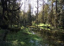Santiam River Area