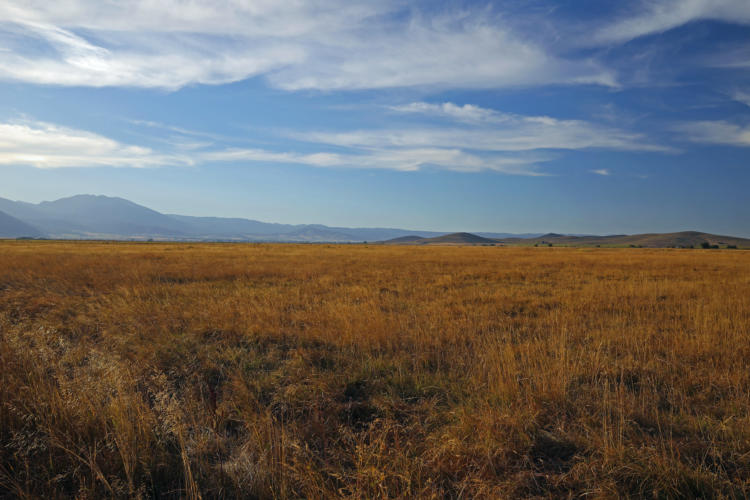 The Baker Valley Wetlands COA in the Blue Mountains ecoregion.