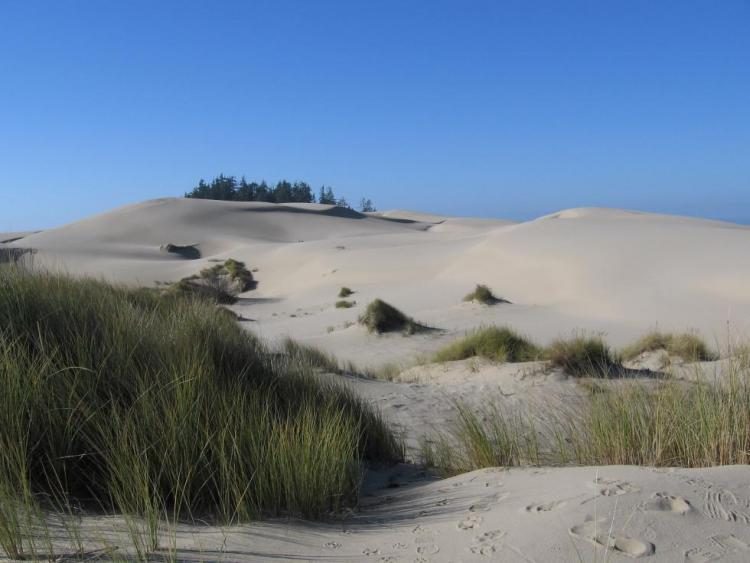 coastal dunes Dunes - getting started dunes provide a buffer to the coastal system - they protect the regions behind them from wind and waves, and provide a substrate, or ground, for plants to form communities upon.