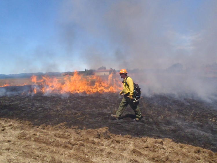Controlled burn as part of a prairie restoration effort in the Willamette Valley, OR.