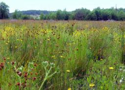 Grassland Strategy Habitat