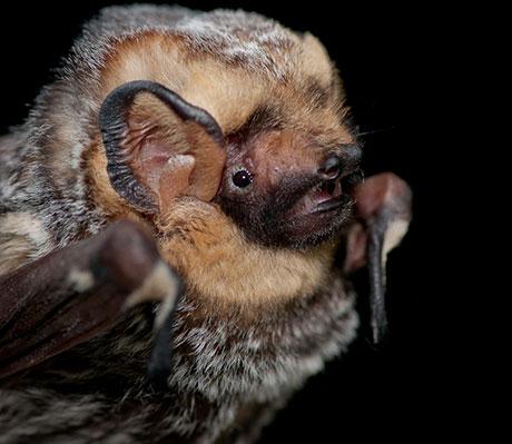 Y Bat