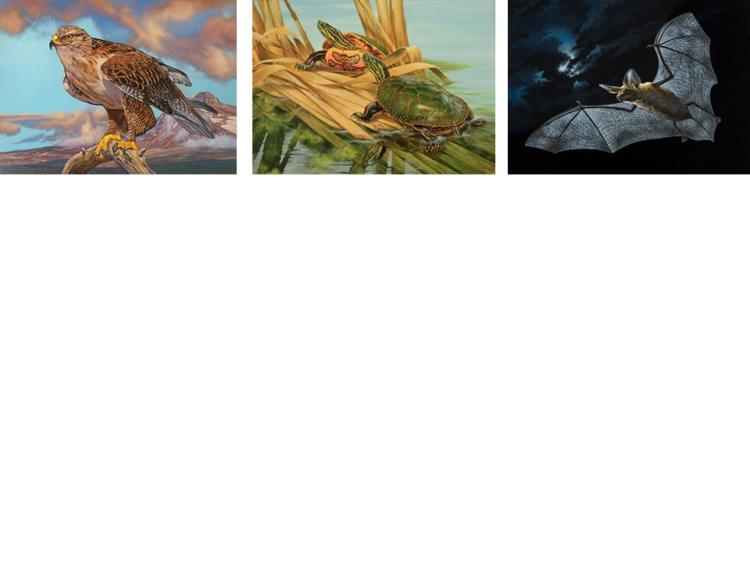 Call for Artists! The Habitat Conservation Stamp art contest