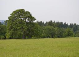 Example of Oak Woodlands, which is a Strategy Habitat within the Oregon Conservation Strategy