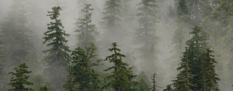 Late-successional conifer forest in the Willamette National Forest.