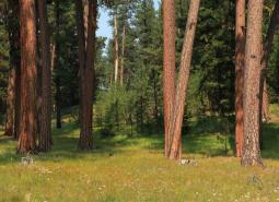 Ponderosa Pine Woodlands Strategy Habitat, within the Ochoco National Forest, in Oregon.