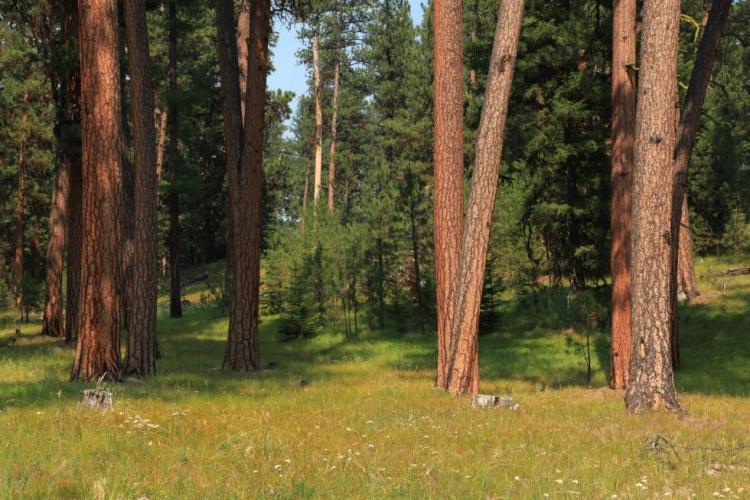 Ponderosa Pine Woodlands Oregon Conservation Strategy